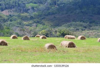 Hay bales on a green field near a mountain side in rural Panama