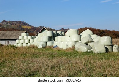 Hay bales packed in white plastic, ready for winter