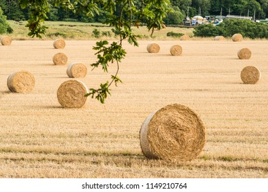 Hay bales rolls at the end of summer.