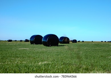 Hay bales sealed with plastic wrap in the Icelandic field