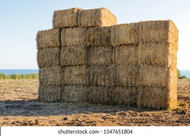 Hay bales stacked in a wheat field