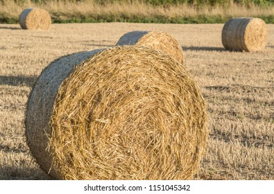 Hay bales in the summer evening sun.