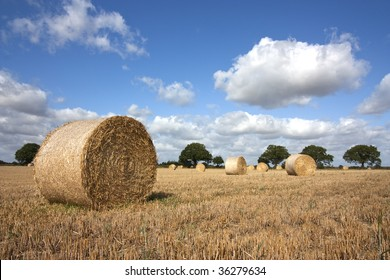 hay bales in summer at harvest time