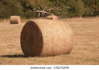 hay bales in summer meadow