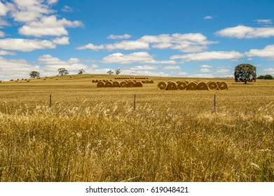 Hay bales in a wheat field on a beautiful blue sky sunny day in rural South Australia