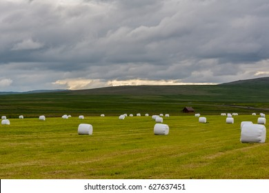 Hay bales in white plastic film stacked on a huge field near Reykholt in Iceland. Sunny summer day at dusk.