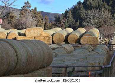 Hay: Bales for winter storage