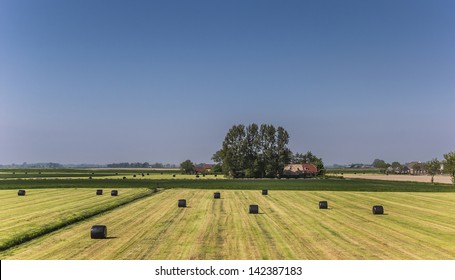 Hay bales wrapped in black plastic in a harvested field