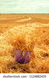 hay in the bucket on the field