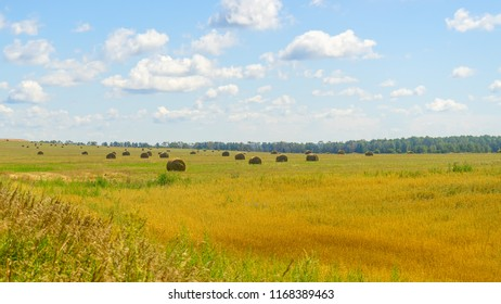 Hay cocks on vast farm field after harvesting at sunny day