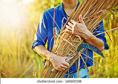hay in farmer's hands