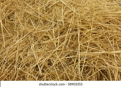 hay, ?straw in the field