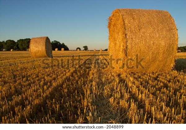 Hay field in Norfolk