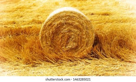 hay harvest time summer agricultural