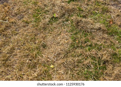 Hay - mown grass close up