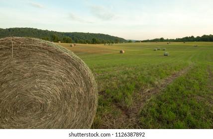 Hay rolls in farm field near the Blue Ridge Mountains in Virginia