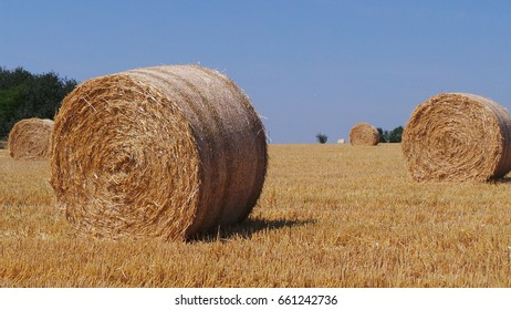 Hay rolls in a field with a blue sky