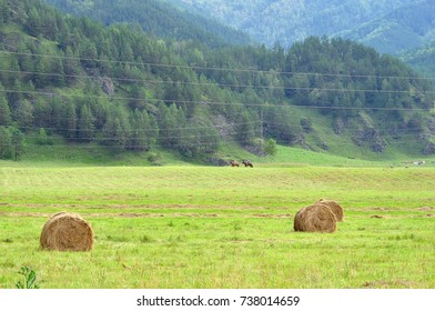 Hay in rolls on a field among mountains.