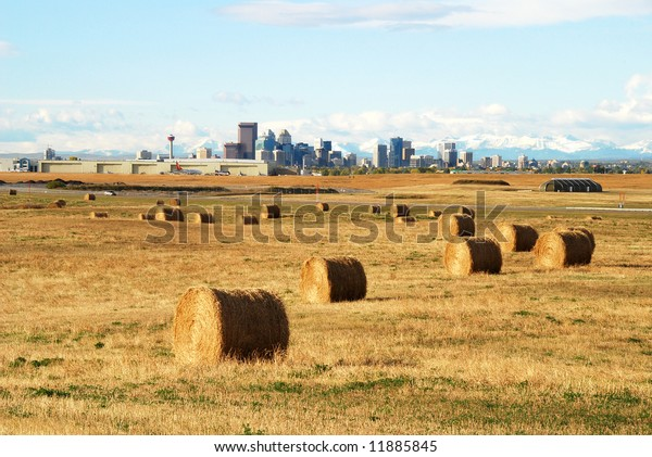 Hay Rolls On Field Calgary Airport Stock Photo Edit Now