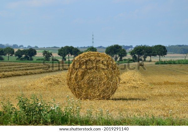 hay-rolls-summer-on-sunny-600w-201929114