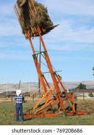 Hay stacking operation using wooden apparatus and horses. An old-style technique, but often used today.