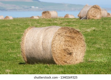 Hay stacks on a meadow near the ocean