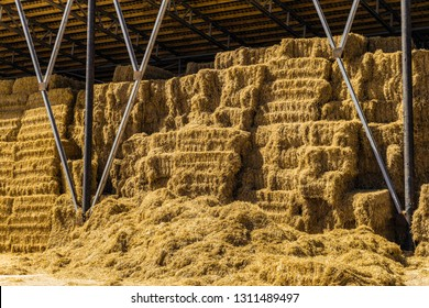 Hay storage with harvested bales of hay for cattle. Agricultural barn canopy.
