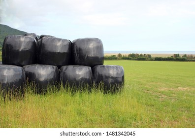 hay straw bales bagged protected plastic covered silage  in pile stack row for feed food at harvesting time stock, photo, photograph, image, picture,
