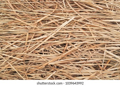 Hay or straw or dry grass background texture.