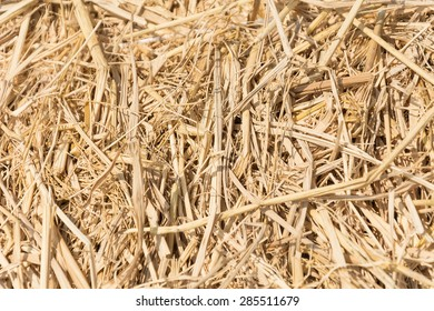 hay texture or detail for background