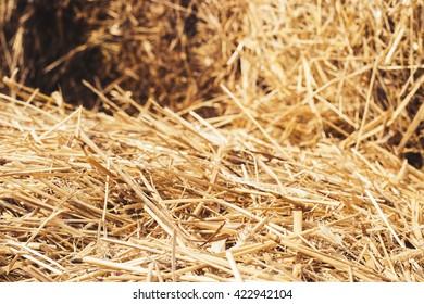 hay in village