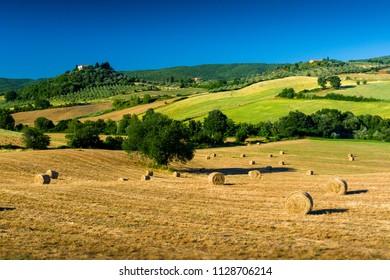 Haycock and trees in sunny tuscan countryside near Massa Marittima, Italy