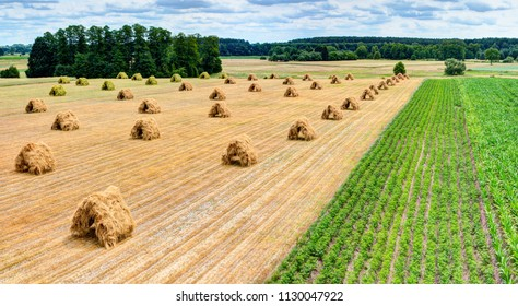 Hayricks in hut shape are laying on the meadow. Summer in Europe.