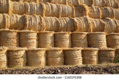 Haystack in agricultural field under the blue sky. Autumn harvest on farm is ready. Rural landscape background. Dry crops in countryside