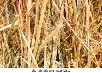 Haystack background, ear of wheat