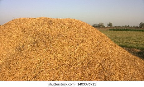 Haystack in The Farm with Skyblue Background