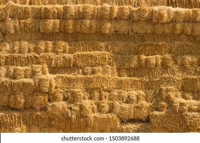 Haystack harvest agriculture farm field. Farmland haystack view. Haystack field scene