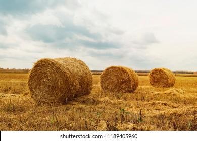 Haystack harvest agriculture field landscape. Agriculture field haystack view. Haystack field panorama.