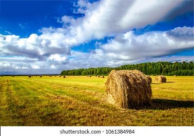 Haystack harvest spring field landscape. Haystack agriculture field landscape. Agriculture field haystacks