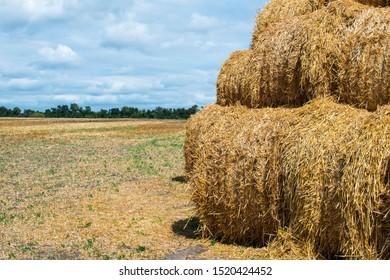 Haystack harvest spring field landscape. Haystack agriculture field landscape. Haystacks stacked on top of each other