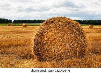 Haystack harvest spring field landscape. Haystack agriculture field landscape. Agriculture field haystacks. rural yellow field