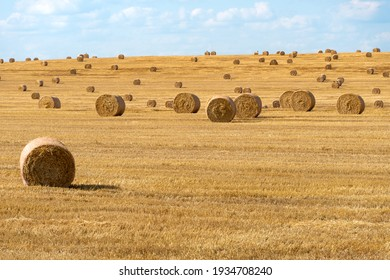 A haystack left in a field after harvesting grain crops. Harvesting straw for animal feed. End of the harvest season. Round bales of hay are scattered across the farmer's field.