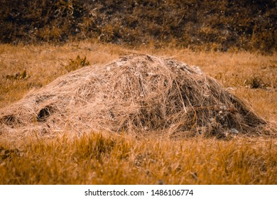 A haystack on the field. Summer countryside landscape with haystack on forest background, concept of agriculture. Rural landscapes.