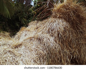 Haystack In The Rice Fields After The Harvest Season Ringdikit Village, Buleleng, North Bali, Indonesia