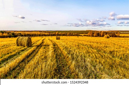 Haystack rolls on agriculture field landscape. Haystack harvesting field. Agriculture haystack harvest. Agriculture field haystack harvest scene