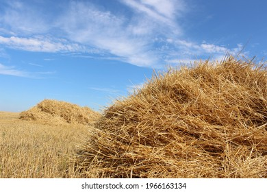 A haystack or straw for feeding herbivores against a blue sky. Mown dry straw (hay) in a stack in a farmer's field against the sky in sunny weather. A big pile of straw in a field. Straw bales.