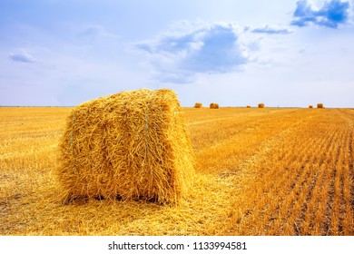 haystacks after harvest on the field