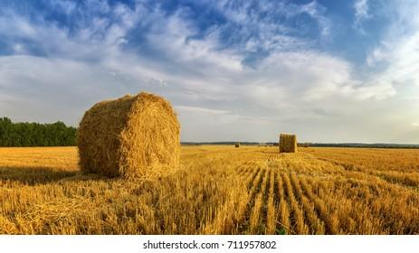haystacks in autumn field, rural, Russia, Ural