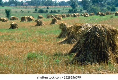 Haystacks in a field.