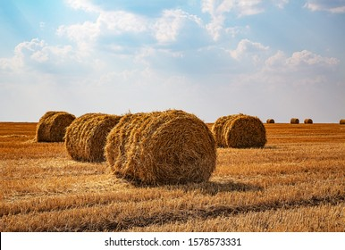 Haystacks harvested on a field in late summer